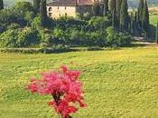Reseña bonsái Toscana Isabel Keats