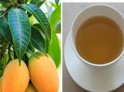 Médico japonés revela secretos hoja mango