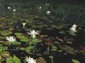 pantanal estaciones, humedal extenso planeta