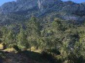 Senderismo Vall d'Albaida 2016, Edición