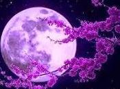 """""""Luna Radiante"""""""