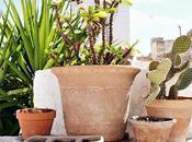 Composiciones plantas para exterior