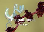 Macro fotografía making-of paso