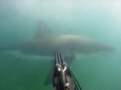 Pescador emboscado combate gran tiburón blanco arpón