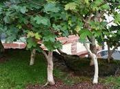 Diorama Acers Campestres Creando nueva base bosque