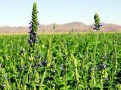 fundamentales propiedades semilla chía