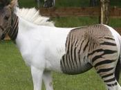 ¡Híbridos animales seguramente creías podían EXISTIR!