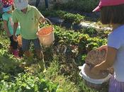 mejor lugar Madrid para recolectar fresas: Finca Monjarama