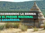 Parque Nacional Cabañeros: Ruta Berrea