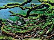arte crear bosques peceras