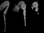 genes desarrollo extremidades: pata mosca pierna vecino vecina-…