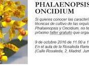 Taller géneros Phalaenopsis Oncidium orquídea...