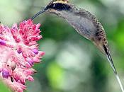 Colibríes Picaflores jardín