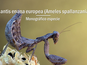 Mantis enana europea miniatura camuflada