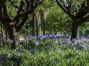 Fotos paisaje urbano árboles flores