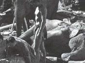 ritos funerarios animales: ¿duelo fuente información?