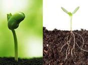 ¿Por plantas crecen hacia arriba?
