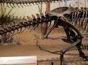 """Canadá: (Día Museo Tyrrell Drumheller, verdadero """"Parque Jurásico"""""""