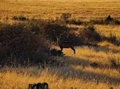 Parque Nacional Cabañeros, Serengueti español