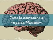 Cómo neurociencia respalda Montessori neuroscience supports
