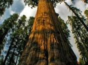¿Cuánto puede crecer árbol?