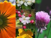Estas flores comestibles alegrarán platos