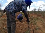 Kenia reforesta zonas áridas contra degradación suelo