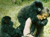 Mujeres cool, Quique Artiach: Dian Fossey