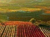 Bodegas Melquior: Arte Vino Rioja.