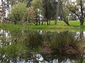 Reserva hammen bosque lechuzas aguda polémica fotografía