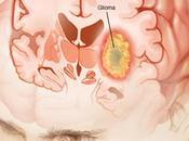 célula cancerígena respeta normas división: proteína