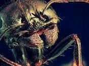 Hormigas zombi otras adorables criaturas