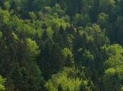 cambio climático amenaza salud bosques suizos