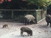 Wildpark: Animales salvajes ciudad Düsseldorf
