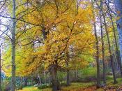 haiku otoño