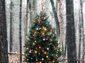 Decorando navidad... alimentando esperanza...