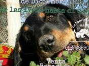 Mercadillo solidario Humanes 15-16 Diciembre