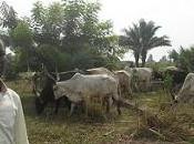 Nochebuena entre pastores