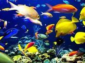 problemas tener muchos peces mismo acuario