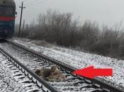 perro protege otro paso tren