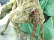 Tigre, cachorro salvado punto morir (Sevilla) Urge ayuda