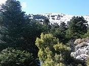 Rutas Puerto Saucillo Bellina Caucón Tajo Caína. Sierra Nieves hace honor nombre...30/01/11
