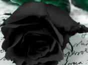 Adios Rosa