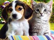 Consejos para perros gatos convivan juntos hogar