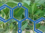 Determinación isoflavonas fitofármacos contienen soja