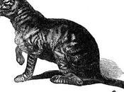 gato caminaba solo Rudyard Kipling