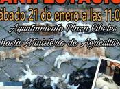 Manifestación contra maltrato animal. Enero Madrid