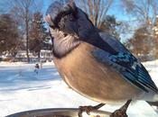 Retratos primer plano pájaros patio trasero fotógrafo