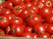 Tomate: