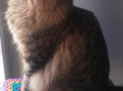 Funda para rascador gatitas